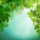 Fondo verde del verano con follaje del verdor imagen de archivo libre de regalías