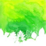 Fondo verde dell'acquerello con le foglie bianche Immagine Stock