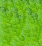 Fondo verde della foglia Immagine Stock