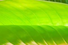 Fondo verde della foglia Fotografia Stock