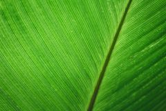 Fondo verde della foglia di verde del fondo della foglia fotografia stock libera da diritti