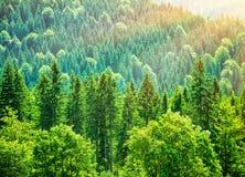 Fondo verde della foresta dell'albero fotografia stock
