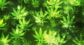 Fondo verde della marijuana Immagine Stock