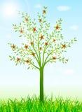 Fondo verde della molla con l'albero e l'erba Fotografia Stock Libera da Diritti