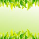 Fondo verde della molla a lamelle Fotografie Stock