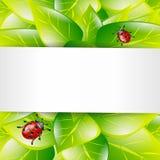 Fondo verde della molla a lamelle Fotografia Stock Libera da Diritti