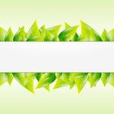 Fondo verde della molla a lamelle Fotografie Stock Libere da Diritti