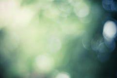 Fondo verde della natura della sfuocatura Fotografia Stock