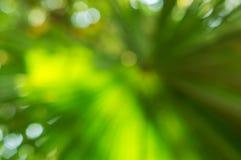 Fondo verde della natura della sfuocatura Fotografie Stock Libere da Diritti