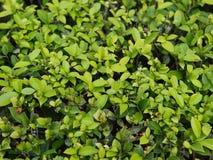 Fondo verde della parete Fotografia Stock Libera da Diritti