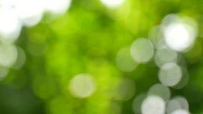 Fondo verde della sfuocatura video d archivio