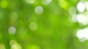 Fondo verde della sfuocatura archivi video