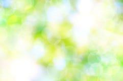 Fondo verde della sorgente Fotografie Stock