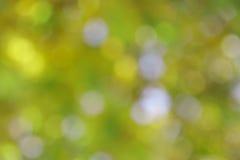 Fondo verde di estate - foto di riserva della sfuocatura Immagine Stock