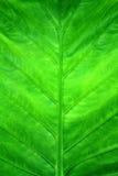 Fondo verde di permesso Immagine Stock
