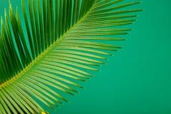 Fondo verde di permesso della palma di estate Fotografia Stock Libera da Diritti