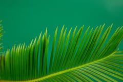 Fondo verde di permesso della palma di estate Immagini Stock