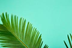 Fondo verde di permesso della palma di estate Immagine Stock