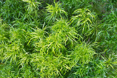 Fondo verde di verde della foglia degli alberi Fotografie Stock Libere da Diritti