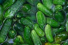 Fondo verde di verdure dei cetrioli verdi freschi Fotografia Stock