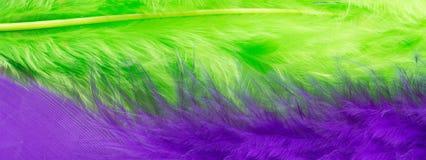 Fondo verde e porpora della piuma, fine su Fotografia Stock