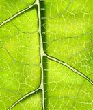 Fondo verde fresco brillante del vector de la hoja Fotografía de archivo libre de regalías