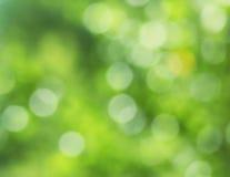 Fondo verde fresco de la falta de definición Fotografía de archivo