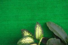 Fondo verde hermoso Foto de archivo libre de regalías
