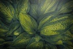 Fondo verde hermoso de la hoja con gotas de lluvia imágenes de archivo libres de regalías