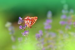 Fondo verde hermoso de la naturaleza Diseño de la fantasía de la mariposa Flores abstractas artísticas Fotografía del arte Primav foto de archivo