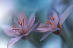 Fondo verde hermoso de la naturaleza Papel pintado art?stico abstracto Art Macro Photography Apenas llovido encendido Foto floral imagen de archivo libre de regalías