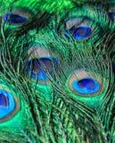 Fondo verde hermoso de las plumas del pavo real Imagen de archivo libre de regalías
