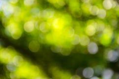 Fondo verde hermoso del bokeh Imagenes de archivo