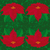 Fondo verde inconsútil flores rojas de la poinsetia Modelo inconsútil Fotografía de archivo libre de regalías
