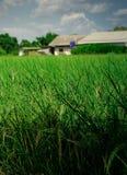 Fondo verde intenso dell'erba Immagine Stock