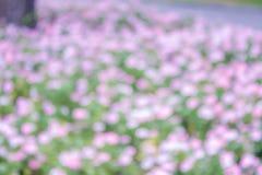Fondo verde intenso e rosa della flora della luce dell'estratto del bokeh della sfuocatura Fotografia Stock