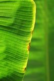 Fondo verde macro de la hoja Fotos de archivo