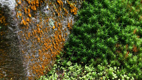 Fondo verde natural Fotografía de archivo libre de regalías