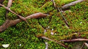 Fondo verde natural Imagen de archivo libre de regalías