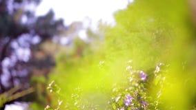 Fondo verde natural abstracto almacen de metraje de vídeo