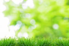 Fondo verde natural con el foco selectivo Fotos de archivo