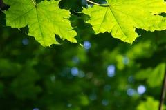Fondo verde natural con el foco selectivo Imagen de archivo