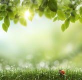 Fondo verde natural con el foco selectivo. mariquita Foto de archivo libre de regalías
