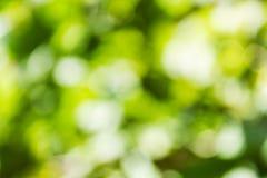 Fondo verde naturale di Bokeh, ambiti di provenienza astratti Fotografie Stock Libere da Diritti
