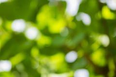 Fondo verde naturale di Bokeh, ambiti di provenienza astratti Immagine Stock