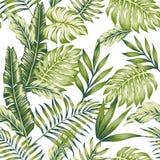 Fondo verde pastello di bianco della giungla Fotografie Stock Libere da Diritti
