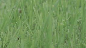 Fondo verde perfetto dall'erba fresca azione Priorità bassa verde naturale stock footage