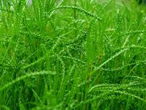 Fondo verde strutturato dei tiri verdi freschi luminosi della molla fotografia stock libera da diritti