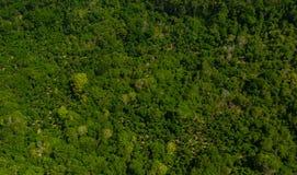 Fondo verde tropical del bosque del balinese de la colina foto de archivo libre de regalías