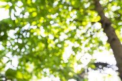 Fondo verde vago della foglia Fotografia Stock Libera da Diritti